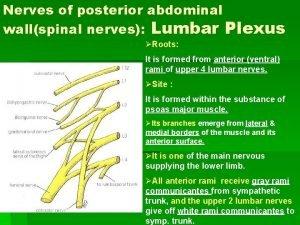 Nerves of posterior abdominal wallspinal nerves Lumbar Plexus
