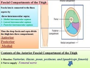 Fascial Compartments of the Thigh Fascia lata is