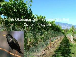 The Okanagan Similkameen Starling Control Program Presentation Outline
