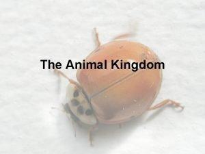 The Animal Kingdom Introduction to the Animal Kingdom