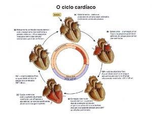 O ciclo cardaco Sstole atrial Maior parte do