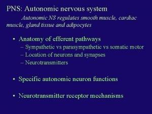 PNS Autonomic nervous system Autonomic NS regulates smooth