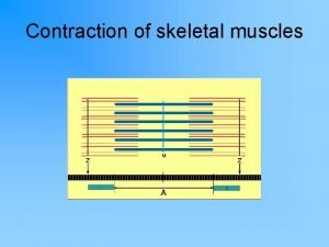 Contraction of skeletal muscles Muscles are stimulated by