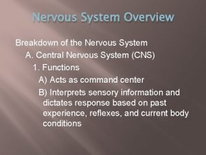 Nervous System Overview Breakdown of the Nervous System