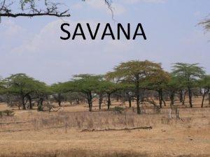 SAVANA Savana je s travo poraena pokrajina Rastejo