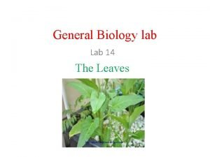 General Biology lab Lab 14 The Leaves The