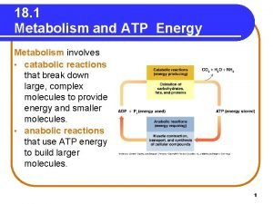 18 1 Metabolism and ATP Energy Metabolism involves