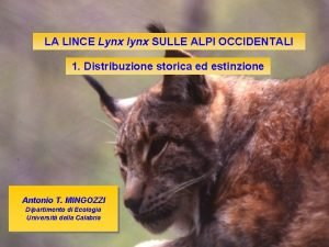 LA LINCE Lynx lynx SULLE ALPI OCCIDENTALI 1