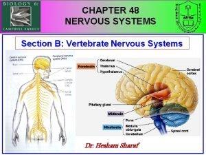 CHAPTER 48 NERVOUS SYSTEMS Section B Vertebrate Nervous