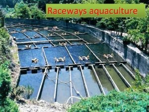 Raceways aquaculture Introduction Raceways are considered flowthrough systems
