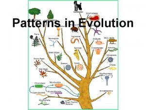 Patterns in Evolution Divergent Evolution Defined closely related