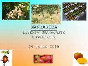 MANGARICA LIBERIA GUANACASTE COSTA RICA 04 junio 2015