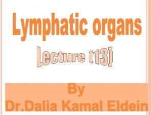 Lymphoid organs Primary lymphoid organs Bone marrow Thymus