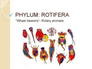 PHYLUM ROTIFERA Wheel bearers Rotary animals Rotifera wheel