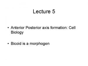 Lecture 5 Anterior Posterior axis formation Cell Biology