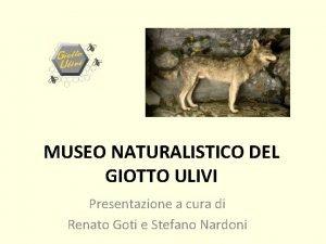 MUSEO NATURALISTICO DEL GIOTTO ULIVI Presentazione a cura