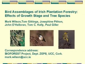 Bird Assemblages of Irish Plantation Forestry Effects of