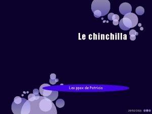 Le chinchilla Les ppsx de Patricia 28022021 28022021