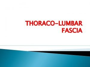 THORACOLUMBAR FASCIA LUMBAR It FASCIA deep fascia encloses