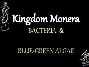 Kingdom Monera BACTERIA BLUEGREEN ALGAE C Kingdom Monera