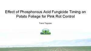 Effect of Phosphorous Acid Fungicide Timing on Potato