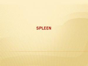 SPLEEN The spleen is an wedgeshaped organ that