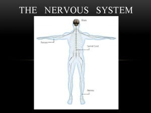 THE NERVOUS SYSTEM HUMAN NERVOUS SYSTEM Main control