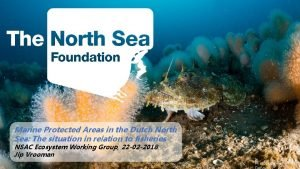 Marine Protected Areas in the Dutch North Sea