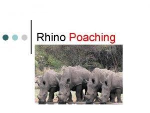 Rhino Poaching 333 rhino were killed last year