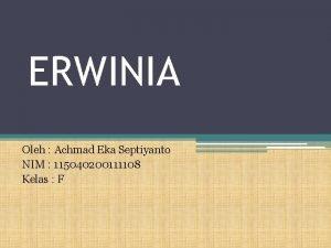 ERWINIA Oleh Achmad Eka Septiyanto NIM 115040200111108 Kelas