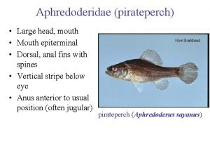 Aphredoderidae pirateperch Large head mouth Mouth epiterminal Dorsal