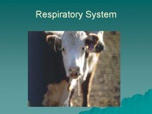 Respiratory System u Disease of the respiratory tract