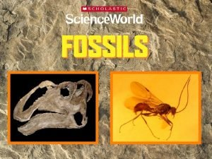 What is a fossil A fossil is the