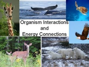 Organism Interactions and Energy Connections Energy Connections All
