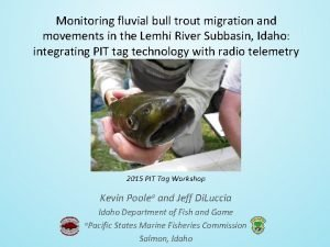 Monitoring fluvial bull trout migration and movements in