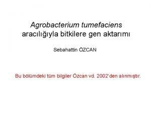 Agrobacterium tumefaciens araclyla bitkilere gen aktarm Sebahattin ZCAN