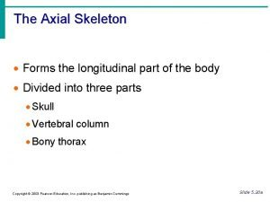 The Axial Skeleton Forms the longitudinal part of