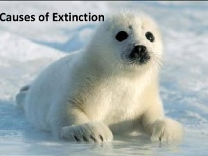 Causes of Extinction Nonhuman causes of extinction Volcanic