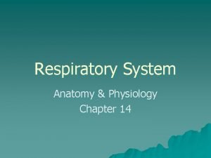 Respiratory System Anatomy Physiology Chapter 14 I Overview