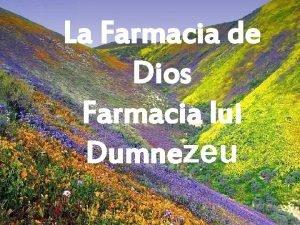 La Farmacia de Dios Farmacia lui Dumnezeu Ni