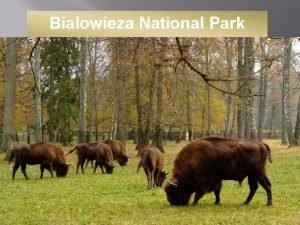 Bialowieza National Park Location Bialowieza National Park is