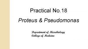 Practical No 18 Proteus Pseudomonas Proteus Gramve actively