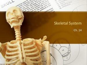 Skeletal System Ch 14 Function of the Skeletal