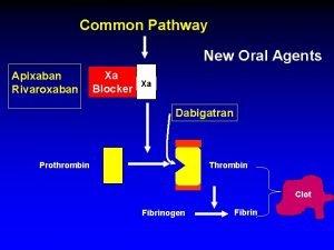 Common Pathway New Oral Agents Apixaban Rivaroxaban Xa