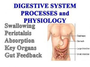 DIGESTIVE SYSTEM PROCESSES and PHYSIOLOGY Swallowing Peristalsis Absorption