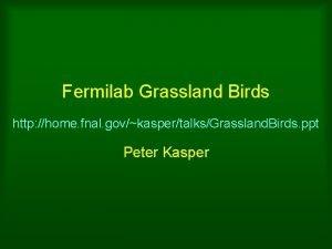 Fermilab Grassland Birds http home fnal govkaspertalksGrassland Birds