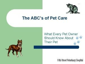 The ABCs of Pet Care What Every Pet