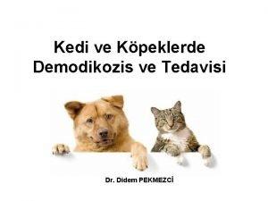 Kedi ve Kpeklerde Demodikozis ve Tedavisi Dr Didem