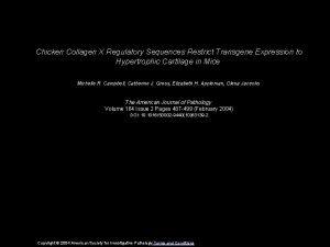 Chicken Collagen X Regulatory Sequences Restrict Transgene Expression