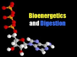 Bioenergetics and Digestion Well be discussing 1 Trends